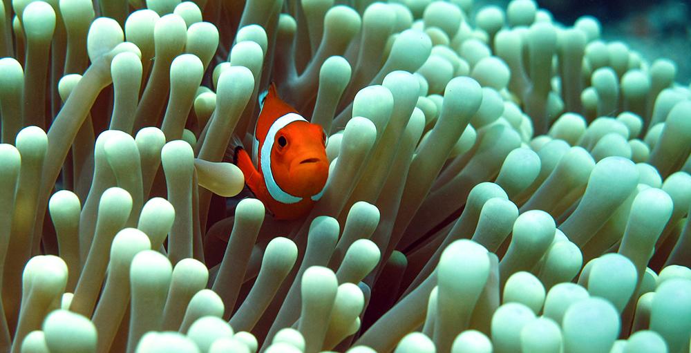 Diving Borneo