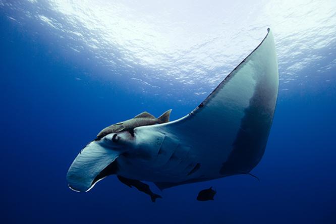Diving Islas Socorro